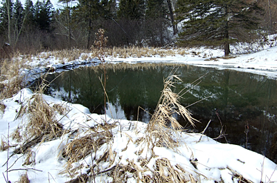 Photo of beaver pond at Kettle River SNA