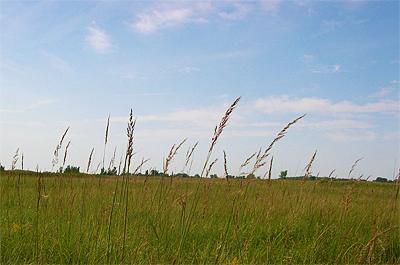 Photo of Langhei Prairie SNA