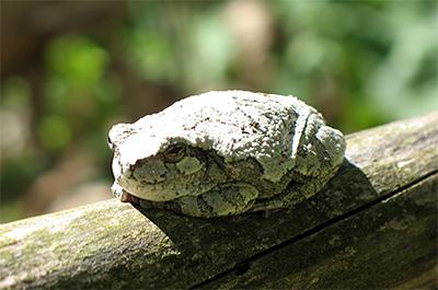 Photo of tree frog