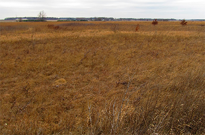 Photo of Iron Horse Prairie SNA