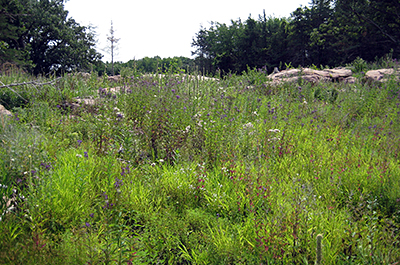 Photo of vegetation recovering at Swedes Forest SNA