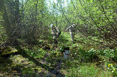 Photo of two adventurous hikers trudging through alder swamp