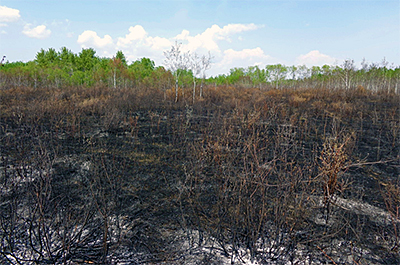 Photo of prescribed burn at Two Rivers Aspen Parkland SNA.