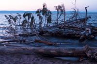 Photo of debris on Lake Superior shoreline