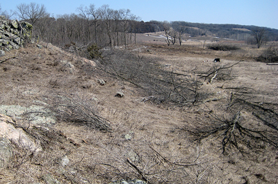 Photo of woody removal at Gneiss Outcrops SNA
