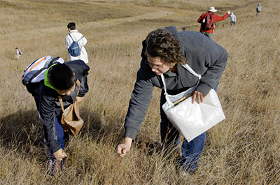 Photo of volunteers collecting prairie seed