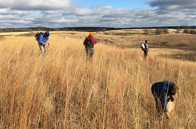 Photo of volunteers collecting seed