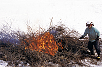 Photo of volunteer burning brush