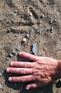 Photo of sandhill crane track