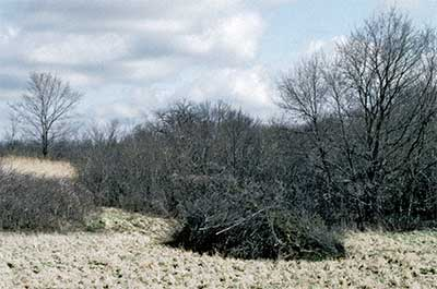 Photo of piled brush