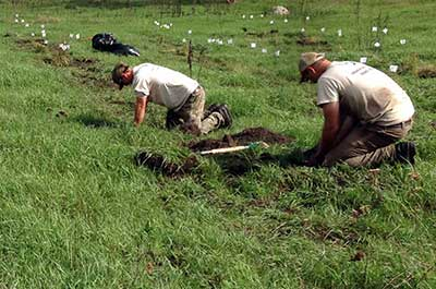 Photo of Conservation Corps crew transplanting tuberous Indian plantain at Kasota Prairie SNA