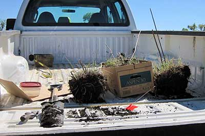 Photo of plants in truck bed ready to be transplanted