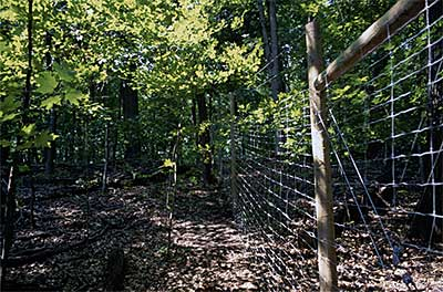Photo of deer exclosure at Wood-Rill SNA