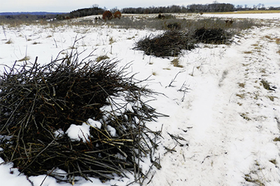 Photo of brush piles
