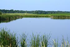 pond near farmland