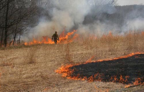A prescribed burn at the Carlos Avery Wildlife Mangement Area.