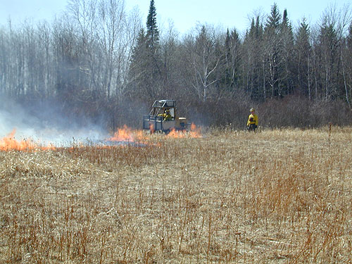 A prescribed burn on the Red Lake Wildlife Management Area.