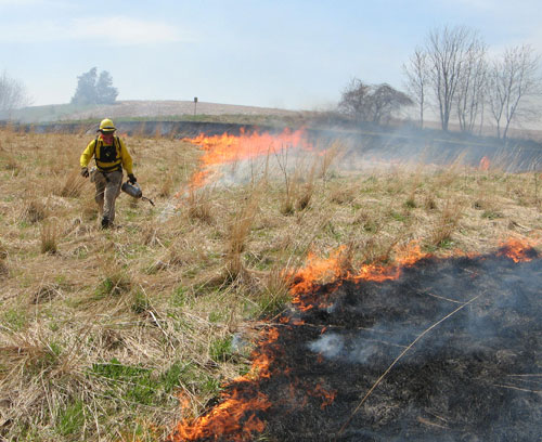 A prescribed burn to aid habitat in the Rochester wildlife work area.