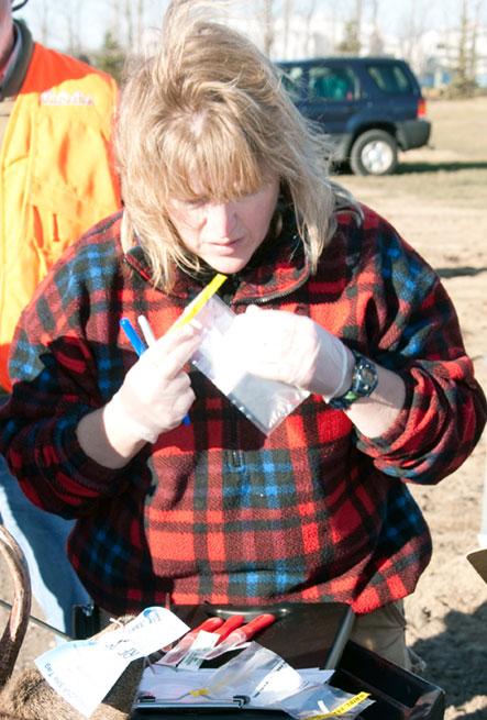 DNR staff taking tissue samples for bovine TB testing