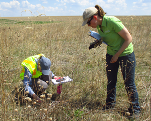 Two conservation workers in a field.