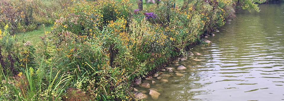 a beautifully restored shoreline featuring native plants.