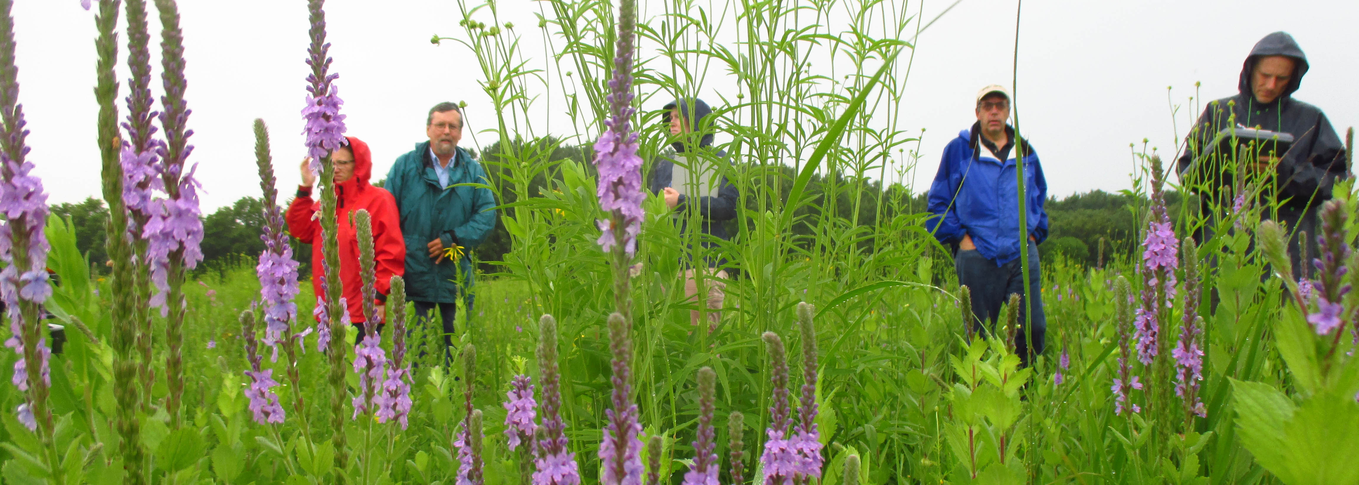 Five people wearing rain jackets, walking through a field with tall grass and purple flowers.