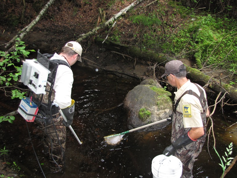 Photo: Sampling fish with backpack electrofisher