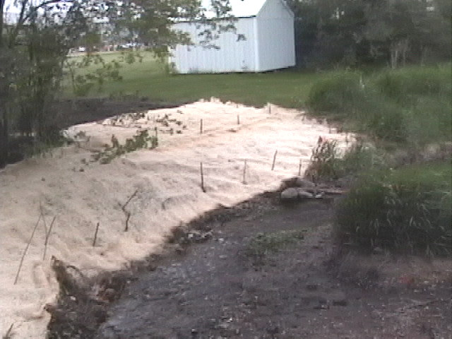 Root wads and sloped bank covered with mulch fabric