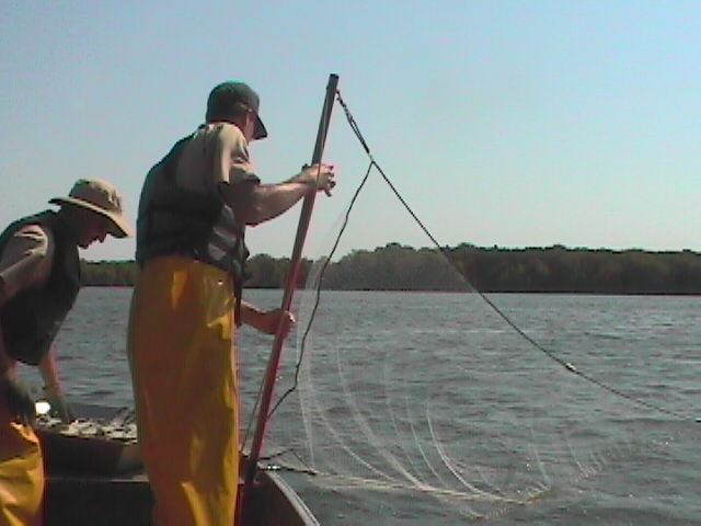 Setting a gill net