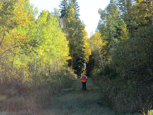 A hunter uses a hunter walking trail at Red Lake Wildlife Management Area.
