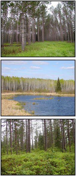 photo: Images for Environmnental Benfits showing Intact forest, wildlife habitat and clean water