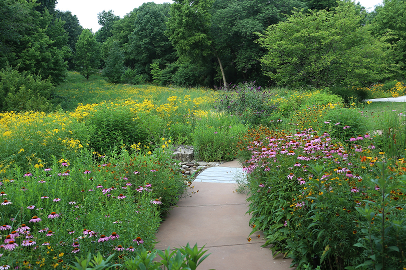 Native flower garden