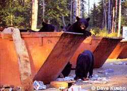 Bear in dumpster.