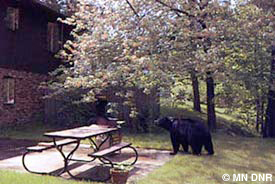 Bear in yard.