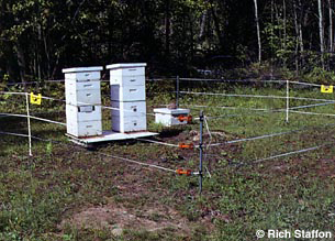 Beehives protected by an energized fencing system.