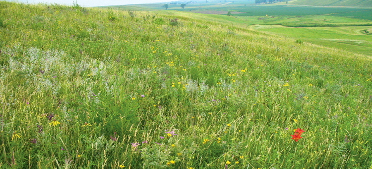Prairie hillside with a variety of wildflowers