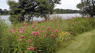 Shoreland habitat.