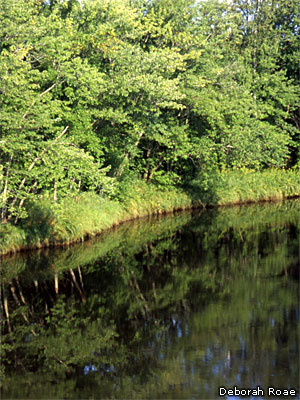 native shoreline