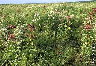 native wildflowers in wet meadow