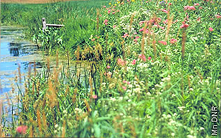 blooming natives on Lake Minne Belle project