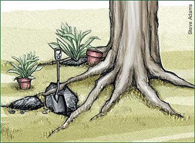 illustration of digging holes between tree roots