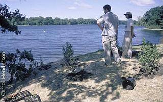 workers view planted shoreline restoration