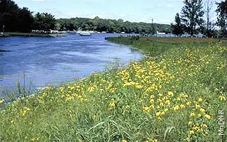 lake with prairie wildflowers