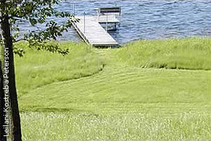 lake shore with small mowed path to dock and large are not mowed