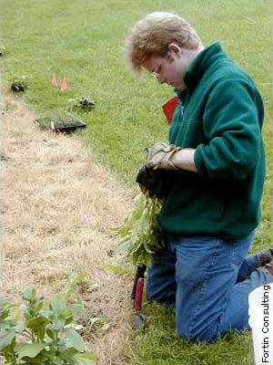 worker planting