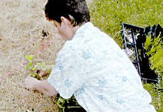 spraying herbicide near lakeshore