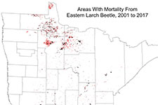 Minnesota map showing Eastern Larch Beetle, 2001 to 2017