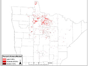 map showing locations of eastern larch beetle in northern minnesota