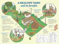 image: traditional yard