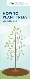 how to planting trees guide